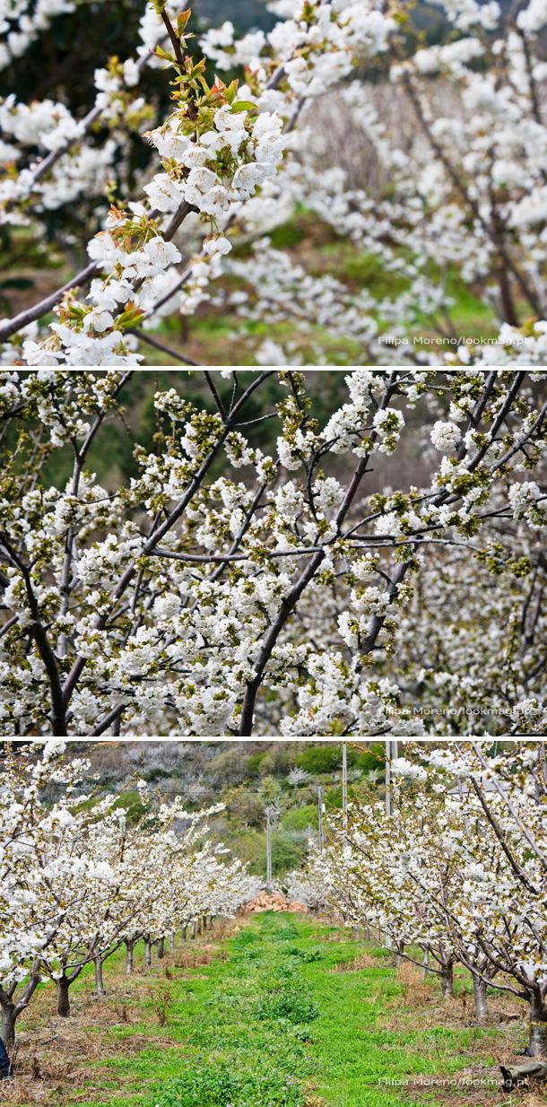 Compal_cerejeiras-LookMag_pt-11-12-13