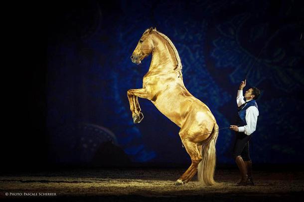 Gala Equestre