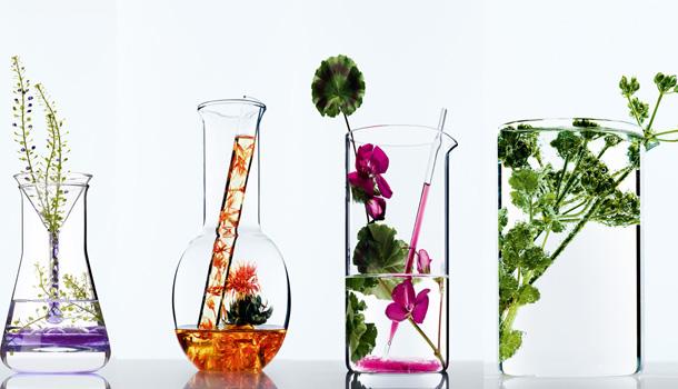 L'Oréal Paris lança Botanicals, nova marca de produtos capilares