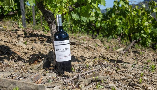 O Quinta da Costa das Aguaneiras é um vinho que reflecte um Douro tradicional.